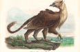 North American Griffin (Gryphon americanus)